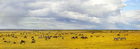 Animales de s de Amboseli ' imagen de archivo