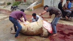 Animales de Slaughtring de la gente en Eid Ul Azha, almacen de metraje de vídeo