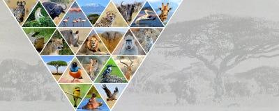 Animales del africano del collage de la foto foto de archivo