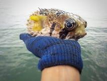 Animales del ahorro Foto de archivo libre de regalías
