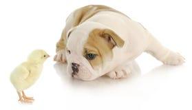 Animales del bebé imágenes de archivo libres de regalías