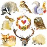 Animales del bosque de la acuarela fijados Fotografía de archivo libre de regalías