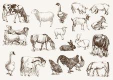 Animales del campo Imágenes de archivo libres de regalías