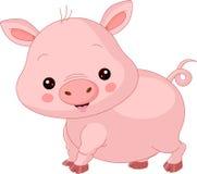 Animales del campo. Cerdo Fotos de archivo