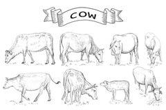 Animales del campo de las vacas Imagenes de archivo