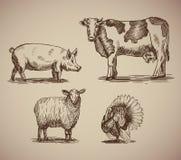 Animales del campo en la compilación del estilo del bosquejo Foto de archivo libre de regalías