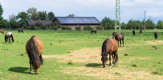 ( animales del campo en prado Fotos de archivo libres de regalías