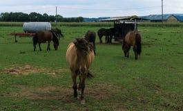 ( animales del campo en prado Foto de archivo