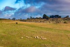 Animales del campo en prado Paisaje de la agricultura interior Foto de archivo