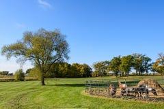 Animales del campo en un campo al lado de un árbol Fotografía de archivo
