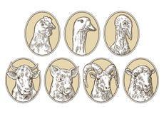 Animales del campo fijados El cerdo, vaca, oveja, pollo, ganso, pavo dirige libre illustration