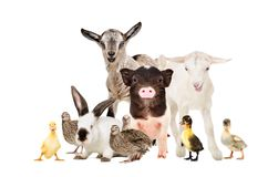 Animales del campo lindos junto imagen de archivo