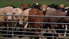Animales del campo que esperan por la puerta 4K metrajes