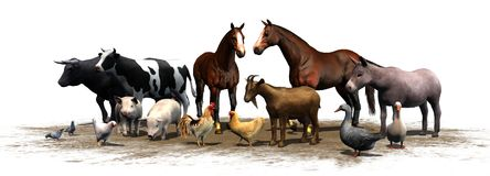 Animales del campo - separados en el fondo blanco Fotografía de archivo libre de regalías