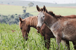Animales del campo: Un burro y un caballo en un pasto de una granja Imágenes de archivo libres de regalías