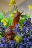 Animales del caracol Imagen de archivo