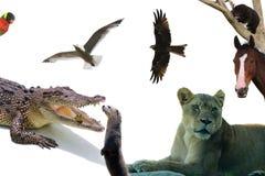 Animales del collage del mundo en un fondo blanco Fotografía de archivo libre de regalías