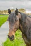 Animales del compañero - caballos Fotos de archivo libres de regalías