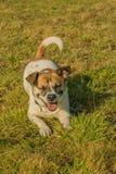 Animales del compañero - perros fotos de archivo libres de regalías