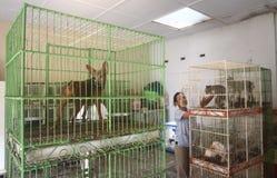 Animales del depósito Imagen de archivo