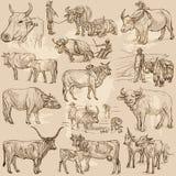 Animales del ganado - un paquete dibujado mano del vector, colección Fotografía de archivo libre de regalías