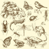 Animales del jardín libre illustration