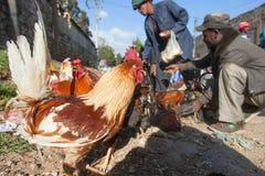 Animales del mercado en Etiopía Foto de archivo libre de regalías