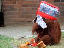 Animales del parque zoológico Imagenes de archivo