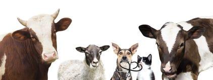 Animales del veterinario foto de archivo libre de regalías
