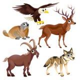 Animales divertidos de la montaña libre illustration