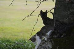 Animales, animales domésticos Foto de archivo