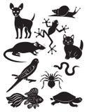 Animales domésticos Imagenes de archivo