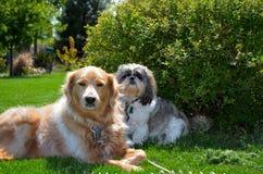 Animales domésticos Fotografía de archivo libre de regalías