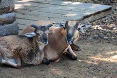 Animales domésticos. Imagen de archivo