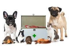 Animales domésticos con el equipo de primeros auxilios Foto de archivo