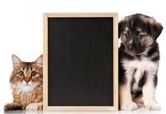 Animales domésticos con la pizarra fotografía de archivo