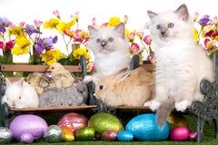 Animales domésticos con los huevos de Pascua en el fondo blanco Imágenes de archivo libres de regalías
