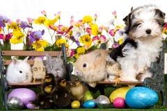 Animales domésticos con los huevos de Pascua en el fondo blanco Imagen de archivo