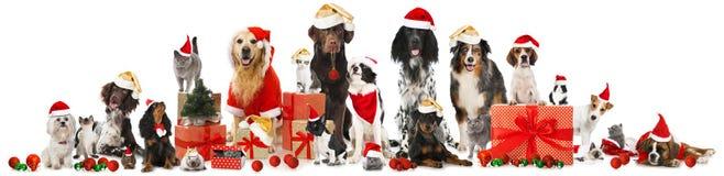 Animales domésticos de la Navidad Imagen de archivo