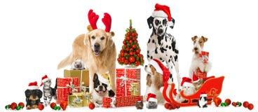Animales domésticos de la Navidad imagenes de archivo