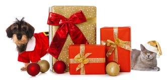 Animales domésticos de la Navidad con los regalos de la Navidad foto de archivo