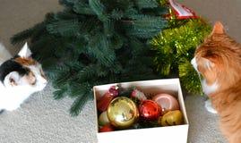 Animales domésticos de los gatos y decoración de la Navidad Imagen de archivo