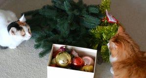 Animales domésticos de los gatos y decoración de la Navidad Foto de archivo