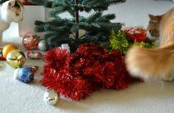 Animales domésticos de los gatos y decoración de la Navidad Fotografía de archivo libre de regalías