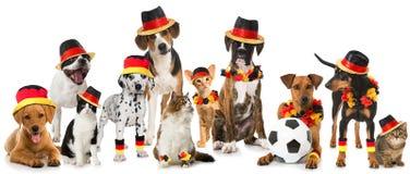 Animales domésticos del fútbol aislados en el fondo blanco fotografía de archivo libre de regalías