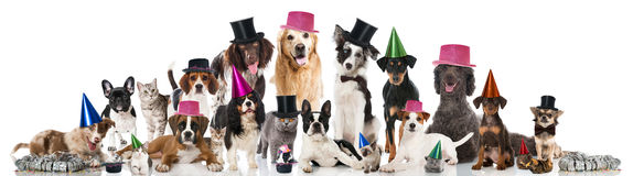 Animales domésticos del partido Foto de archivo