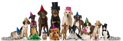 Animales domésticos del partido foto de archivo libre de regalías
