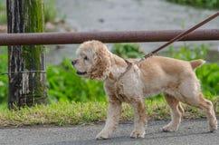 Animales domésticos del perro Fotos de archivo