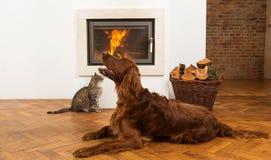 Animales domésticos delante de la chimenea Fotografía de archivo libre de regalías