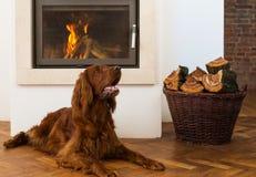 Animales domésticos delante de la chimenea Imágenes de archivo libres de regalías